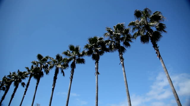 Palm Trees in Los Angeles video