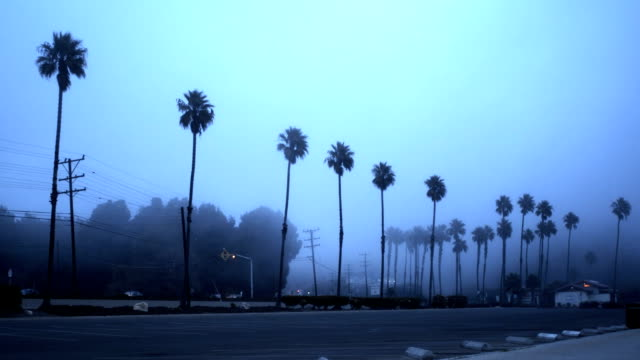 Palm trees in the fog - HD video