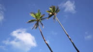 istock Palm Trees in the Wind against summer Sky 4K Video 1211911714
