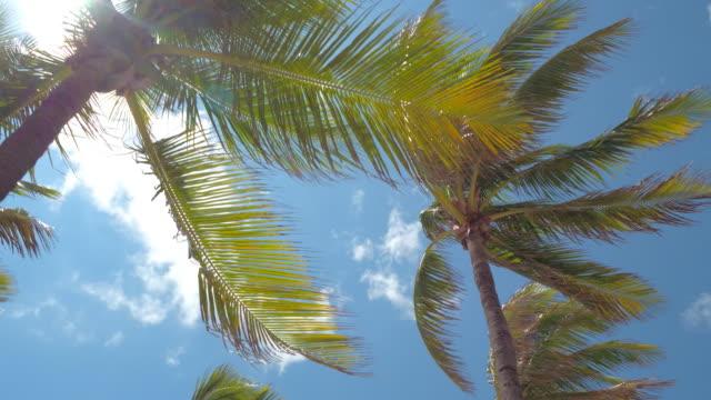 dłoń drzewa na wietrze - palm tree filmów i materiałów b-roll