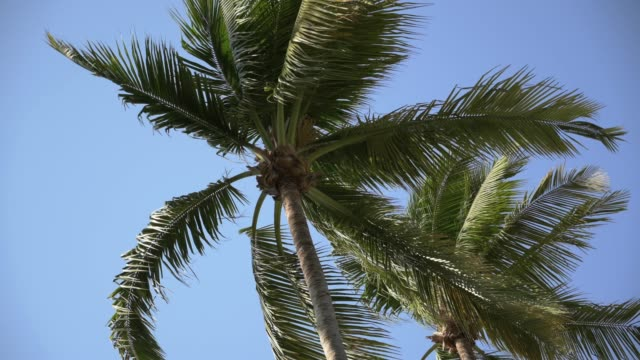 palm trees moving in the wind under a blue sky. - guerrero video stock e b–roll