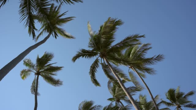 palm trees moving in the wind. - guerrero video stock e b–roll