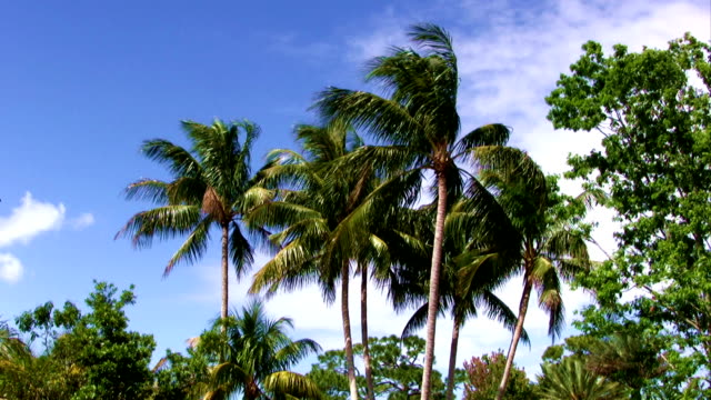 Palm Trees Moving in the Wind with Blue Sky video