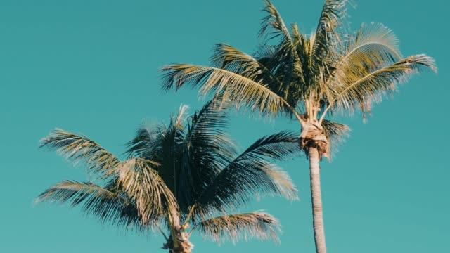 palmen, die mit dem wind bewegt - palme stock-videos und b-roll-filmmaterial