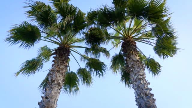 Palm trees on blue sky background.