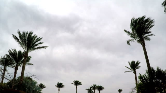Palm Trees on Cloudy Sky Background video