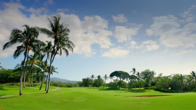 Palm Trees on Lush Green Golf Course, Blue Clouds and Sky video