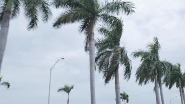 Palm trees on Miami Highway during the day with a cloudy sky in the background. Palm trees on Miami Highway during the day with a cloudy sky in the background. florida us state stock videos & royalty-free footage