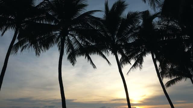 vidéos et rushes de palmiers sur la plage de l'océan. soleil tropical vers le bas. - arbre tropical