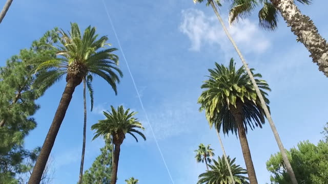 Palm trees on the streets of LA