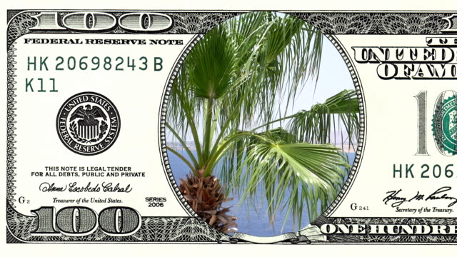 Palm trees on the wind in frame of 100 dollar bill