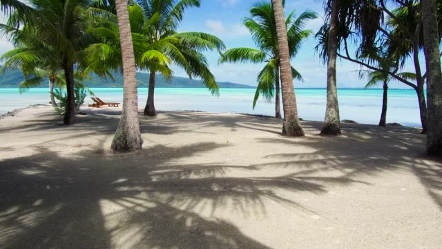 palm trees on tropical beach in french polynesia travel, seascape and nature concept - tropical beach with palm trees and sunbeds in french polynesia lounge chair stock videos & royalty-free footage