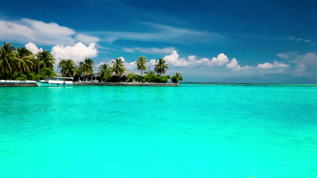 Palm trees over tropical lagoon with a boat in Maldives video