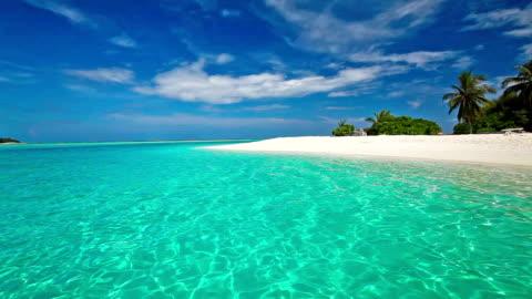 palme tropicali sulla laguna con spiaggia bianca in maldive - idillio video stock e b–roll