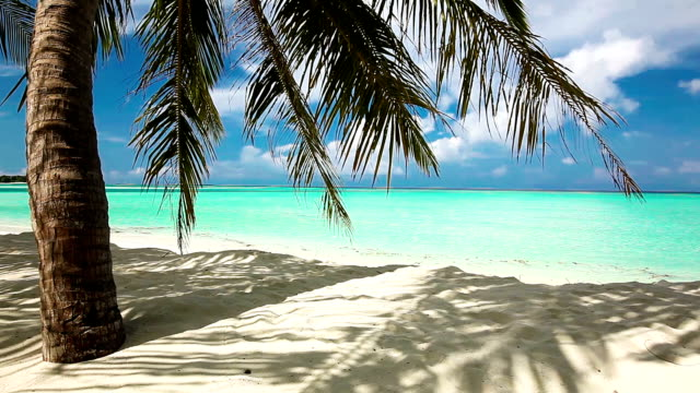 Palm trees over tropical lagoon with white beach video