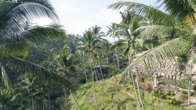 palm trees rice terraces aerial 4k - tempio video stock e b–roll