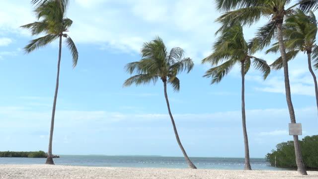 白い砂の浜で風にヤシの木揺れる - ヤシの木点の映像素材/bロール