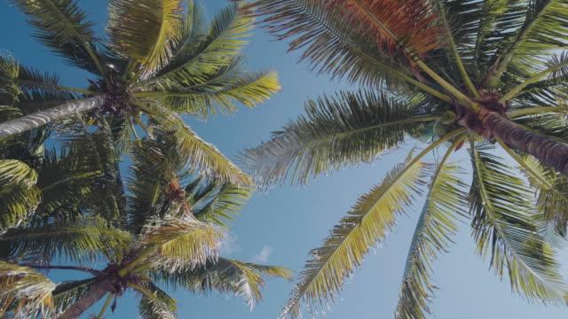 vídeos de stock e filmes b-roll de palm trees swaying in the wind - oscilar