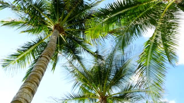 風に揺れるヤシの木陰でおくつろぎください。 - ヤシの木点の映像素材/bロール