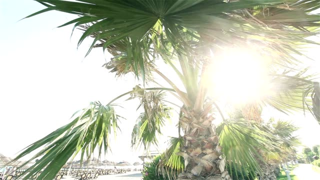 Palm trees swaying in wind against beautiful surf and blue clear sky on background. Tropical plants growing on exotic paradise island concept video