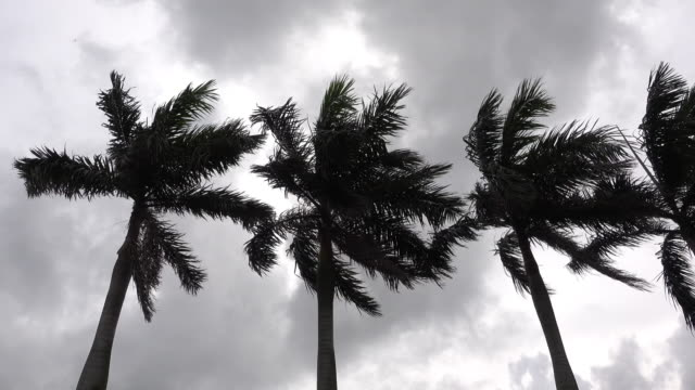 Palm Trees under Strong Wind in Storm video