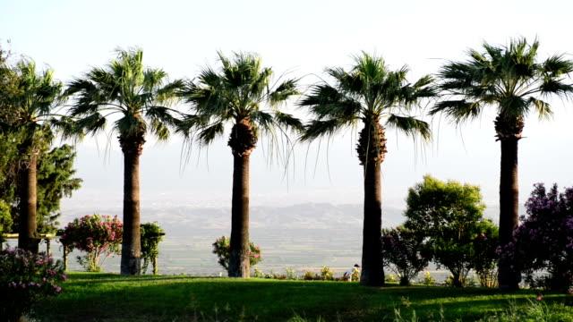 Palm trees Palm trees. aegean turkey stock videos & royalty-free footage