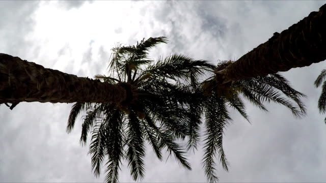 Palm Trees, View From Below. video
