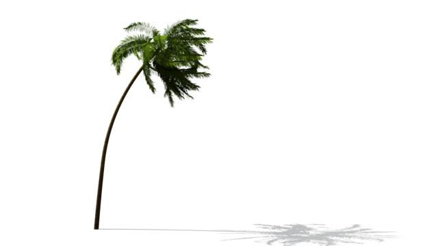 palm - palm tree filmów i materiałów b-roll