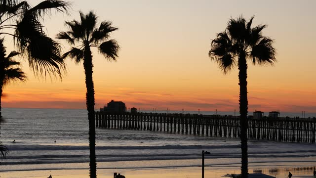 Palms and twilight sky in California USA. Tropical ocean beach sunset atmosphere. Los Angeles vibes.