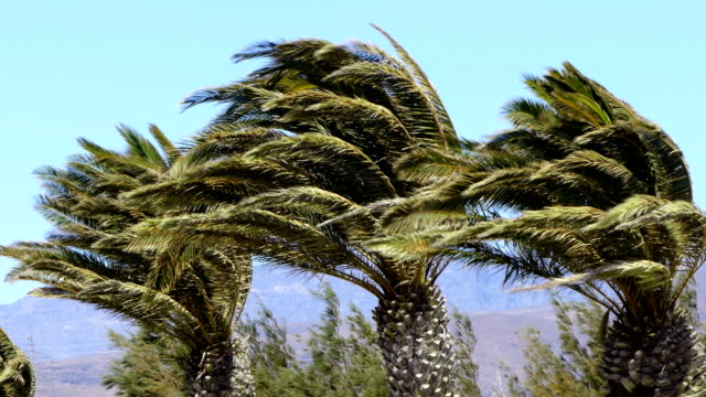 palms and wind. - albero tropicale video stock e b–roll