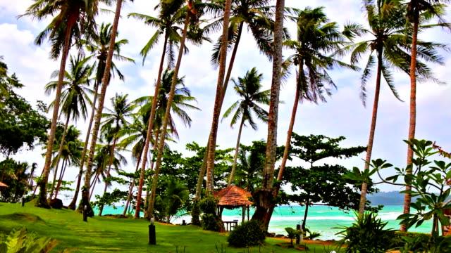 palms grove am tropischen strand - baumgruppe stock-videos und b-roll-filmmaterial