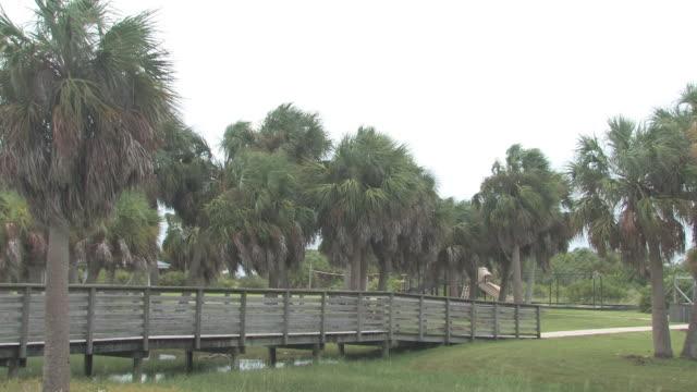 palmen im wind 2 hd-bis 30 - tropischer baum stock-videos und b-roll-filmmaterial