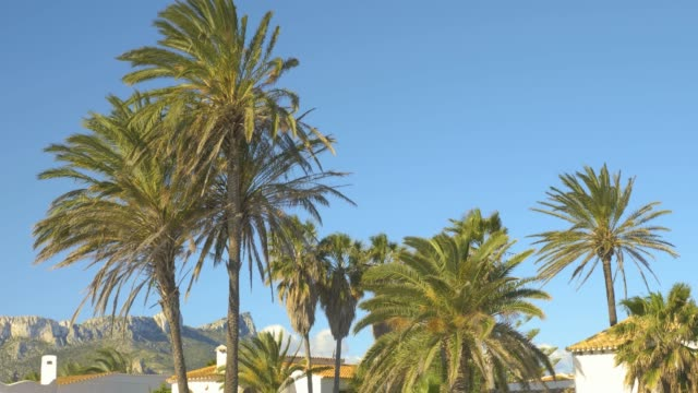 Palms in Wind on sunny day