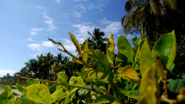Palms on a tropical beach video