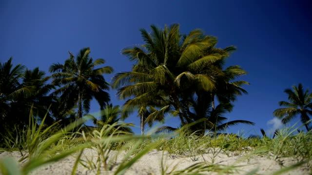 DOLLY: Palms on a tropical beach video