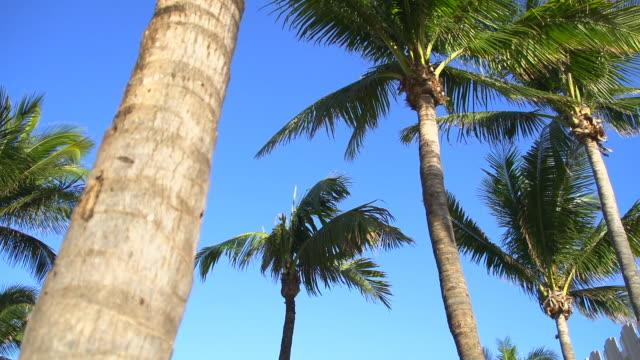 HD: Palms On Florida Beach video