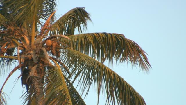 Palmtree. video