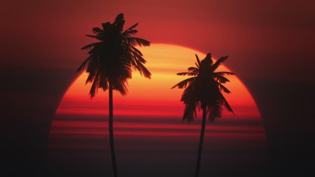 Palmtrees against the sun video