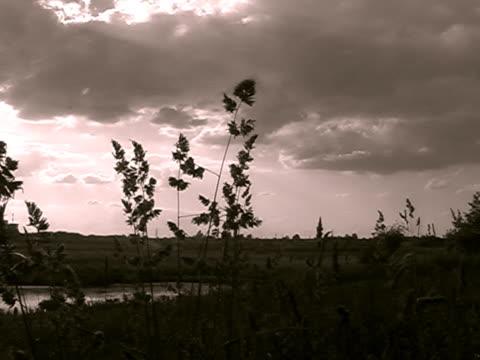 pal.sunset.sepia の調子を整えます。 - 層積雲点の映像素材/bロール
