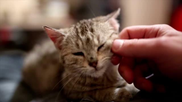 pampering kitty cat - viziarsi video stock e b–roll
