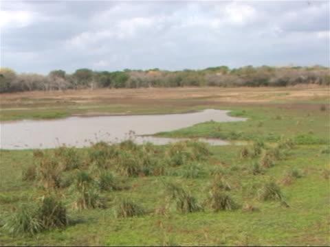 Pan across African waterhole in Swaziland. video