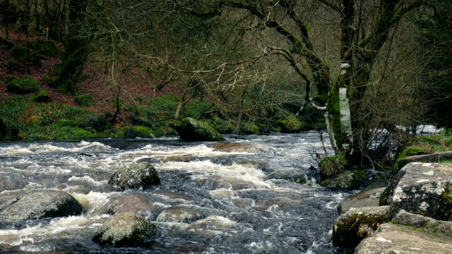 Pan Across Rugged Woodland River video