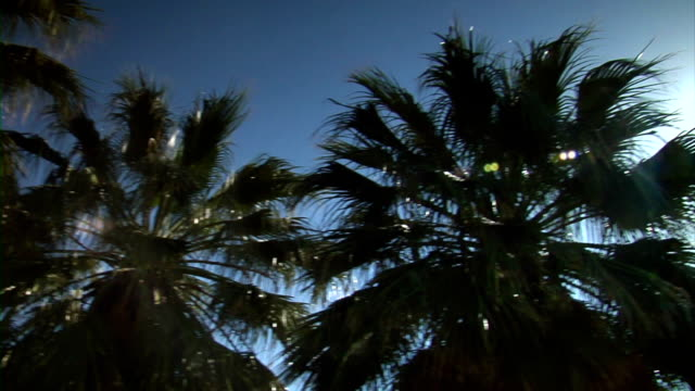 Pan around on Palm video
