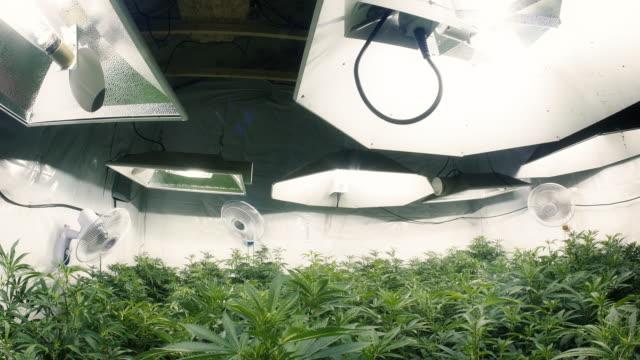 Pan Down to Indoor Marijuana Plants Fisheye Lens video
