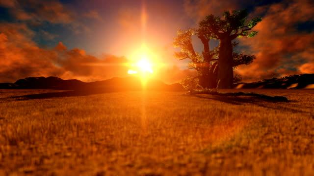 pan african desert mit baobab-baum bei sonnenuntergang - affenbrotbaum stock-videos und b-roll-filmmaterial