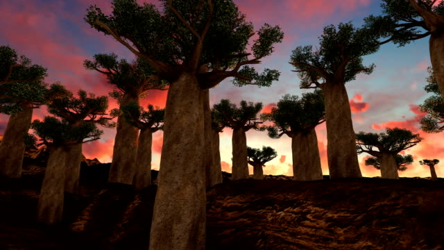 pan of giant baobab trees at sunset - nigeria video stock e b–roll