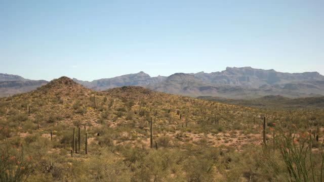 sanoran 砂漠とサボテン ajo、アリゾナ州近くのパン - オコティロサボテン点の映像素材/bロール