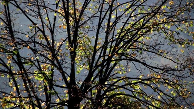 Pan na pół nagi drzew w jesiennym – film