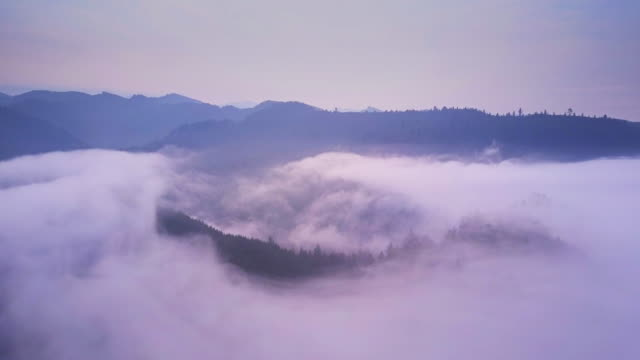 Pan Over Mist Wreathed Treetops of California Coastal Redwood Forest - Aerial Shot video