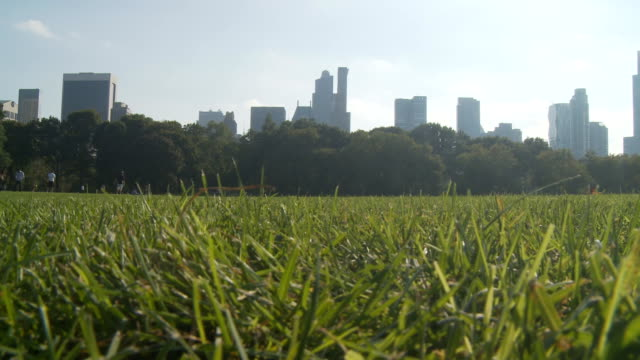 pan shot meadow in central park video
